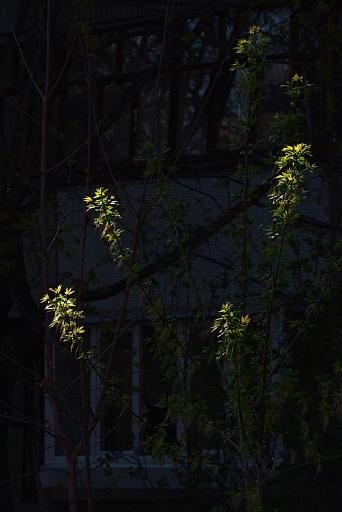 Прикрепленное изображение: k70-16988-tree.jpg