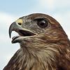 Birder фотография